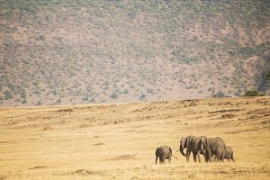 family of elephants in Masai Mara Ke