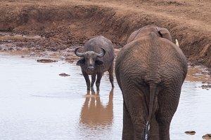 Landscape in aberdare in kenya