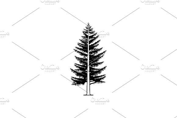 Tree Spruce Larch Black On White