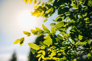 Green tree leaves background