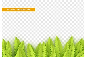 Grass, shape plant leaves border isolated with transparent background.