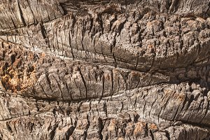 Texture of the bark of a Palm tree