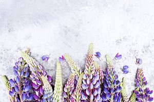 Background with colorful lupines