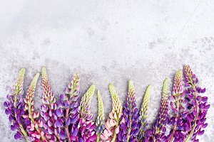 Background with violet lupines