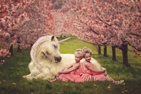 Unicorn In Cherry Blossom Field