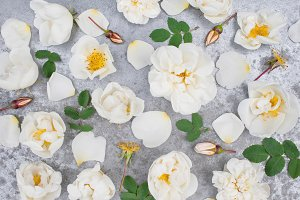 Background of white vintage roses