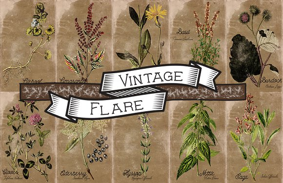 Vintage Plant Illustrations Antique2