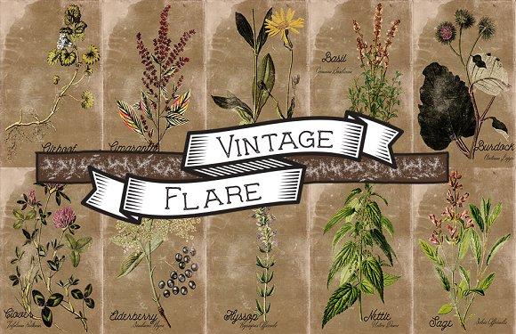 Vintage Plant Illustrations Antique2