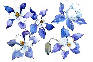 Blue aquilegia flower PNG watercolor