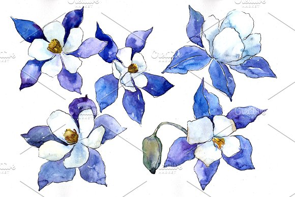 Blue Aquilegia Flower PNG Watercolor