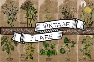 Vintage Plant Illustrations Antique4