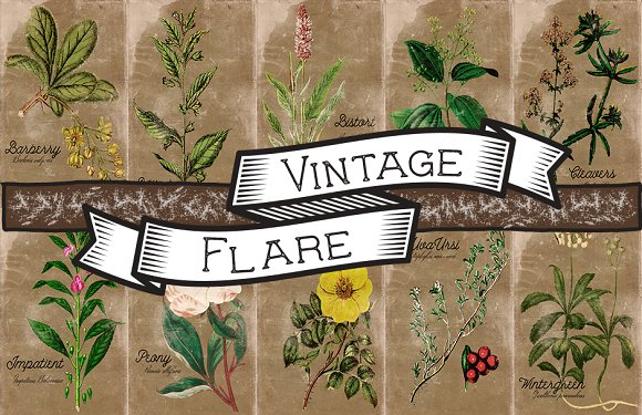 Vintage Plant Illustrations Antique5