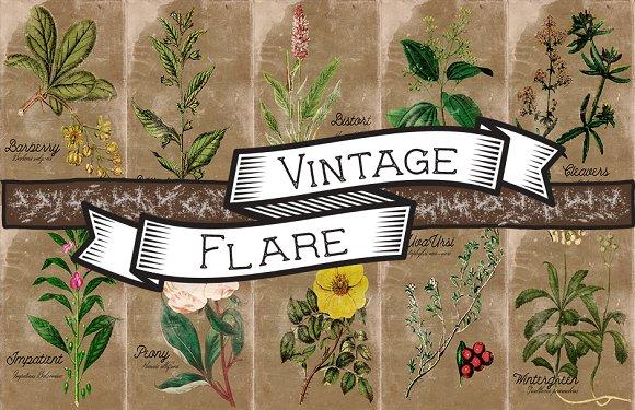Vintage Plant Illustrations Antique5