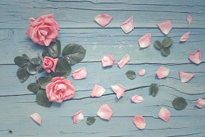 Blue wooden background with roses