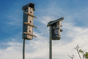 Old bird houses