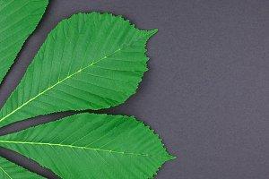 Pattern with fresh green chestnut
