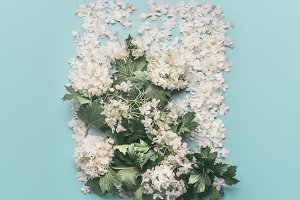 Floral layout made of white flowers