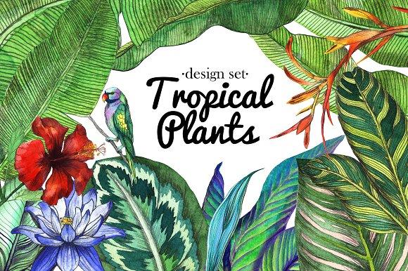 Tropical Design Set
