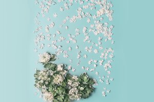 Layout made with white flowers