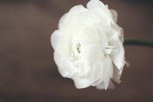 Single white flower on wood