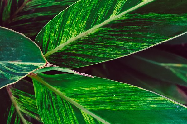 Beauty & Fashion Stock Photos: Porechenskaya - Tropical green background