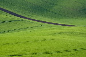 Green wave landscape, Czech Republic