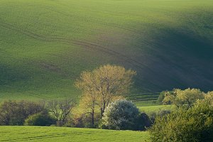 Green waves landscape with trees