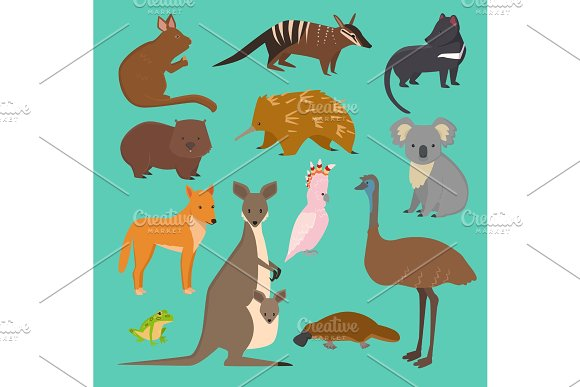 Australian Wild Vector Animals Cartoon Collection Australia Popular Animals Like Platypus Koala Kangaroo Ostrich Set Isolated On Background