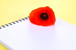 Red poppy flower and white blank notebook on a yellow pastel background. Copy space for text.