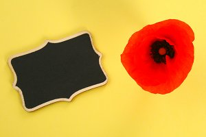 Red poppy flower and chalkboard on a yellow pastel background. Copy space for text.