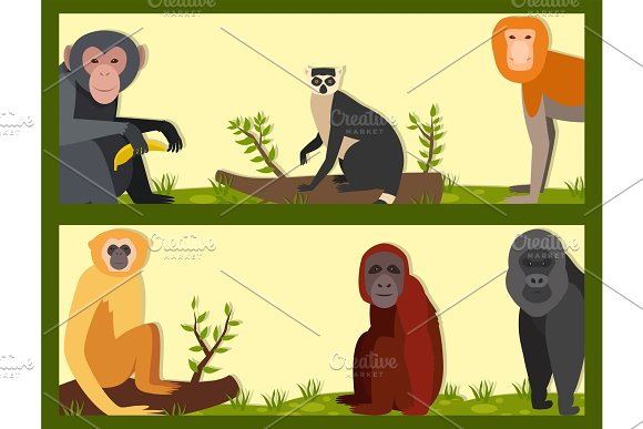 Monkey Character Animal Different Breads Wild Zoo Ape Chimpanzee Vector Illustration