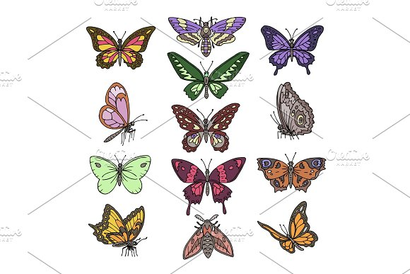 Butterfly Vector Colorful Insect Flying For Decoration And Beautiful Butterflies Wings Fly Illustration Natural Decor Set Isolated On White Background