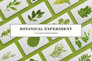 BOTANICAL EXPERIMENT