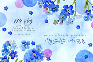 Myosotis arvensis watercolor PNG set