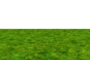 Lush grass field on white background, 3d illustration.
