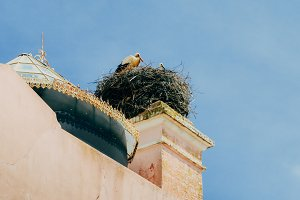 White stork family giant nest with little baby on top of a roof in Algarve, Portugal