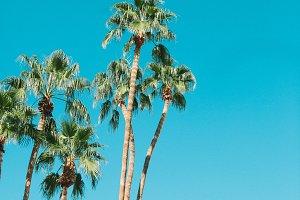 The Saguaro Palm Springs Sky Hotel