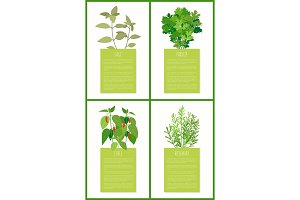 Sage Parsley Chile and Rosemary Spices Collection