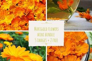 Calendula marigold flowers bundle
