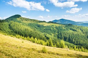 Green sunny hills with forest