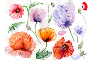 Sweet flowers colorful poppy PNG set