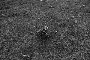 small roots of the field