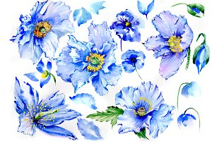 Gently blue poppies PNG watercolor