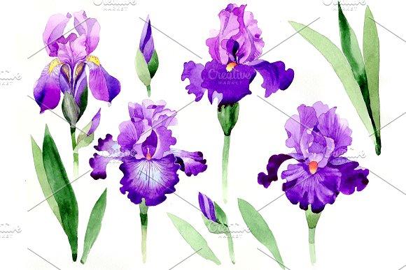 Cool Purple Irises PNG Watercolor