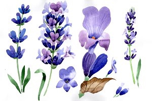 Purple lavender flowers  PNG set