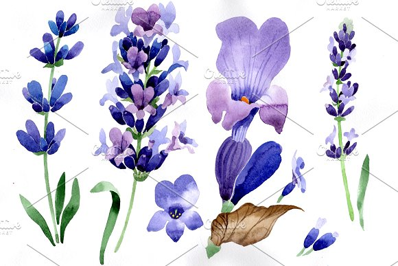 Purple Lavender Flowers PNG Set