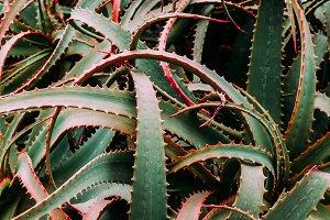 Aloe background. Minimal fashion gre