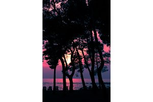 Silhouettes of trees against the background of the sunset and the sea.