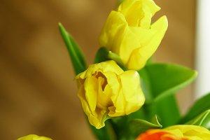 Flower bouquet. Tulips