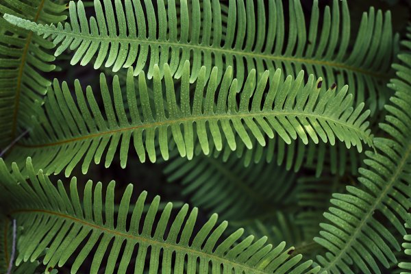 Nature Stock Photos: Roll Kader - Fern in tropic